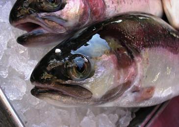 101404italy154fish