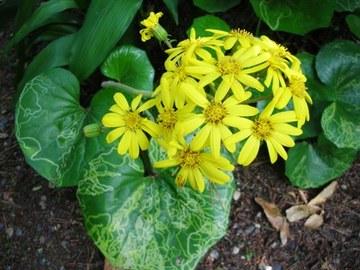 Dscn5011_yellowflower_for_web