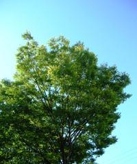 Dscn6023_tree