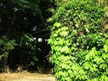Dscn6025_green